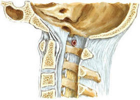 Причины остеохондроза шейного отдела