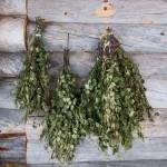 Лечение остеохондроза берёзовыми листьями