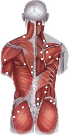 Спина человека
